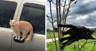 Katten die de wetten van de natuurkunde trotseren: 13 grappige foto's van katten in de meest absurde poses