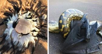 Australia: 13 foto riassumono alcune delle specie animali più bizzarre e pericolose per l'uomo