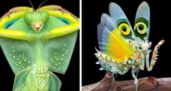 Deze fotograaf maakt prachtige foto's van bidsprinkhanen in alle vormen en kleuren