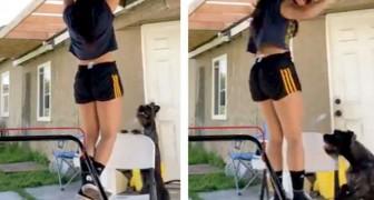 Uma garota faz ginástica em casa: seu adorável cachorro pensa que ela está em apuros e decide ajudá-la