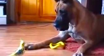 Un cane e un pappagallo nella conversazione più curiosa di tutti i tempi