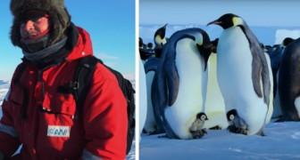 Una troupe di documentaristi BBC rompe le direttive e salva un gruppo di pinguini da morte certa