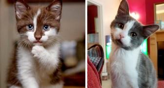 13 gatti talmente teneri che i loro padroni non hanno potuto fare a meno di fargli un fotografia