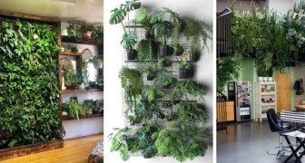 10 splendide idee per realizzare pareti verdi all'interno utilizzando piante vere