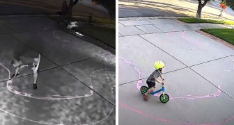 A child plays with his bike every evening in the neighbor's driveway: the owner makes a course for him