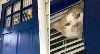 Un gatto fissa con rancore la padrona che lavora in giardino: anche lui voleva stare all'aria aperta con lei