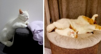 13 gatos que escolheram adormecer nos cantos e posições mais engraçados