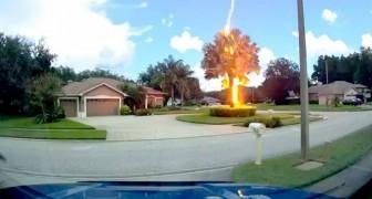 Een donderslag bij heldere hemel raakt ondanks het mooie weer een boom: de video toont de gewelddadige inslag