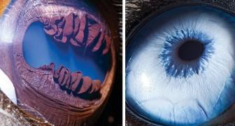 Ce photographe saisit de très près les yeux des personnes et des animaux : les photos semblent venir de l'espace