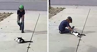 Um gato com um olho só brinca todos os dias com o filho do vizinho, acolhendo o menino como fazem os cachorros