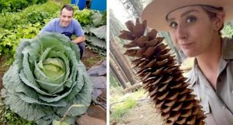 15 fois où Dame Nature nous a surpris par son talent démesuré