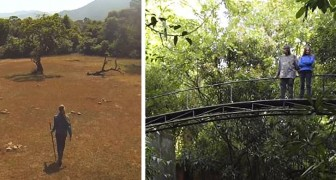 Una coppia acquista un terreno di 120 ettari per ripiantarci la foresta: oggi è un'enorme riserva naturale