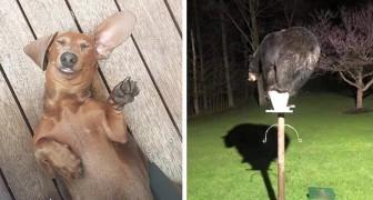 20 comportements d'animaux si absurdes et drôles qu'il est impossible de retenir un sourire