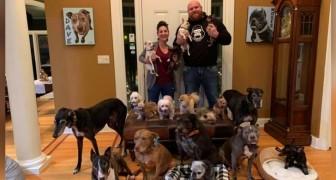 Um casal gasta 55 mil dólares para tornar a casa deles um lugar mais confortável para seus 21 cães idosos