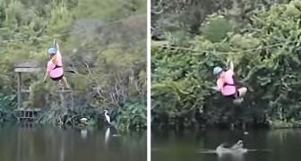 Eine Frau, die an einer Seilrutsche fliegt, wird von einem Alligator überrascht, der aus dem Wasser springt, um sie zu beißen
