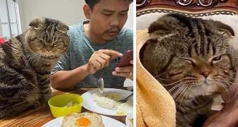 Een vrouw vertelt met hilarische foto's hoe haar kat erin slaagde haar man te stelen