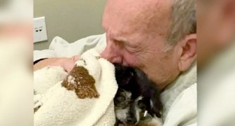 An old man dies of a broken heart shortly after his faithful dog passed away due to illness