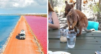 Queste immagini mostrano alla perfezione perché l'Australia è un luogo strano e meraviglioso