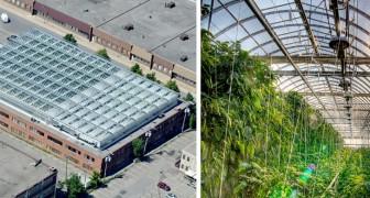 Questa serra sul tetto a Montreal è grande quanto 3 campi da calcio e nutre il 2% della città con frutta e verdura
