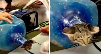 Ze redden een kitten die vastzit in een plastic fles: ze hebben hem met opzet erin geduwd