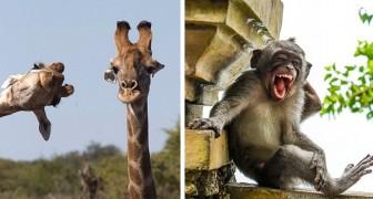 Ces 22 photos finalistes du Comedy Wildlife Awards montrent les animaux les plus drôles de l'année