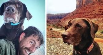 Ele descobre que sua amada cadela tem câncer e parte com ela em uma longa e inesquecível viagem