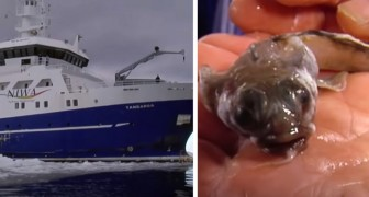 Un gruppo di scienziati scopre dei veri e propri mostri degli abissi nelle profonde acque dell'Antartide