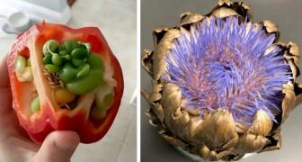 20 Beispiele, wo Obst und Gemüse zu früh keimten und ungewöhnliche Kreaturen hervorgebracht haben
