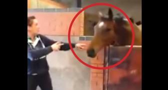 Non mi sarei mai aspettato di vedere un cavallo ballare spontaneamente in questo modo