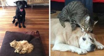 18 katten die zich gewoon niet goed wisten te gedragen met hun honden- vrienden