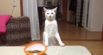 De bazin zegt de kat het eten op te eten, de reactie van de kat is hylarisch