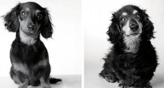 Uma mulher tira uma série de fotos emocionantes para mostrar como nossos amigos cães envelhecem