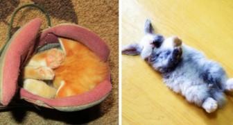 20 fotos de animais que adormeceram nos lugares e posições mais absurdos