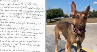 De hittar en hund med ett rörande budskap runt halsen och bestämmer sig för att ge den ett helt nytt liv
