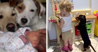 15 Fotos, die von der tiefen Zuneigung zeugen, die zwischen einem Kind und einem Hund entstehen kann