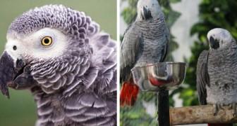 5 pappagalli imparano delle parolacce e insultano i visitatori del parco: la direzione è costretta a isolarli