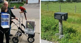 16 gånger som folk har sett sina grannar att göra saker som gränsar till det absurda