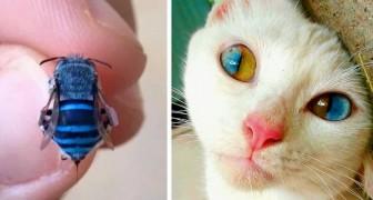 15 Tiere mit einzigartigen Merkmalen zeigen, dass die Natur unglaublich kreativ sein kann