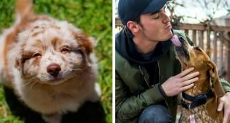 Uno studio afferma che il battito cardiaco dei cani accelera quando gli diciamo ti amo