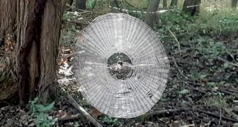 USA: Durch Zufall wurde ein Spinnennetz entdeckt, das so groß ist, dass es einen Menschen fangen könnte