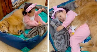A little girl takes a nap hugging her dog and cat: a moment of rare warmth and tenderness