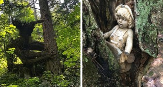 20 mensen die tijdens het wandelen in het bos werden geconfronteerd met de meest vreemde en verontrustende dingen