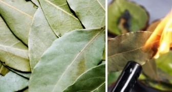 La tecnica facilissima per bruciare l'alloro: un rimedio naturale che riduce l'ansia