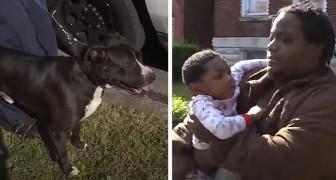 Un perro callejero ha protegido por horas a un niño que se había perdido fuera de la casa: es su héroe de 4 patas