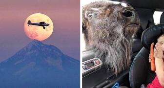 18 Fotos, bei denen es durch perfektes Timing gelungen ist, lustige und unvergessliche Szenen zu schaffen