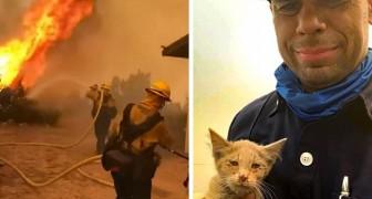 Un pompiere salva un micio da un terribile incendio: ora è il suo fidato gatto del fuoco