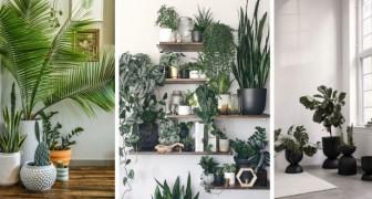 10 proposte una più bella dell'altra per arredare il salotto con le piante e arricchirlo col verde