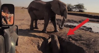A baby elephant is destined to die in a well, but these heros help him out !