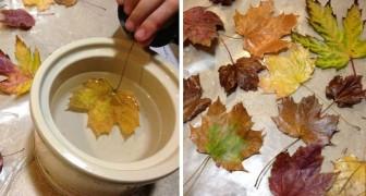 Il metodo per cerare le foglie autunnali e preservarle per creare decorazioni bellissime e durature