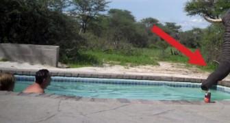 Delle persone si stanno rilassando in piscina quando arriva un ospite inatteso